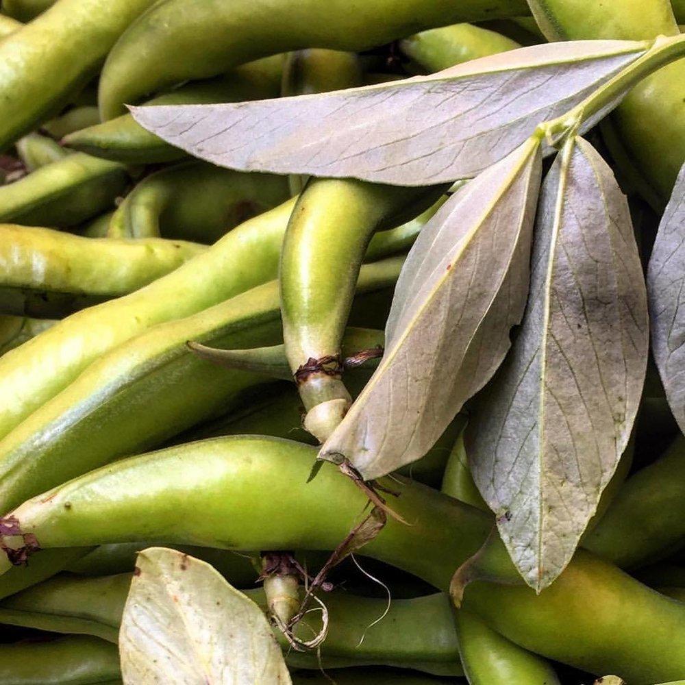 Fava beans.  #italy #rome🇮🇹 #vegetables #springtime  (at Piazza Campo Di' Fiori)