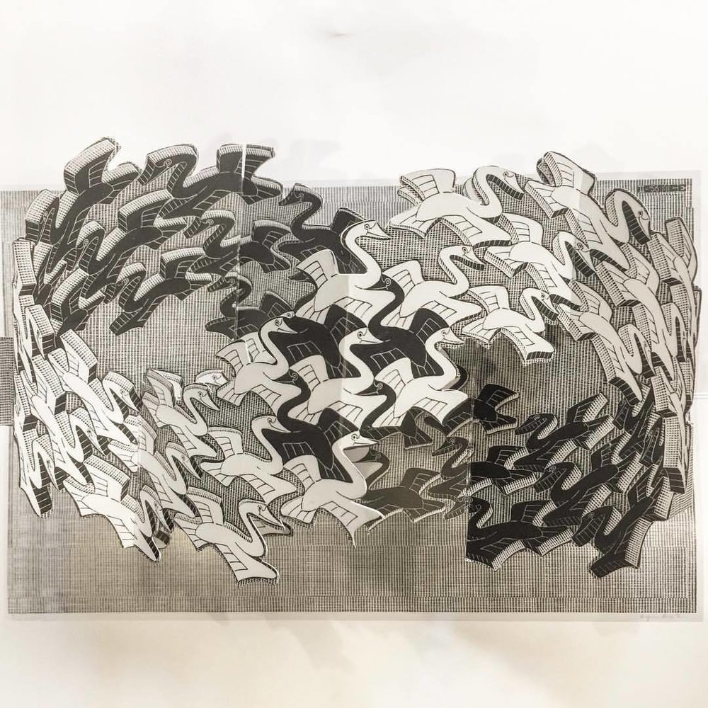 Maurits Cornelis Escher, or commonly M. C. Escher (1879-1972), was a Dutch graphic artist who made mathematically inspired woodcuts, lithographs, and mezzotints.  Entitled Swans, from a pop-up book.  #art #graphicart #mcescher (at Piazza Navona)