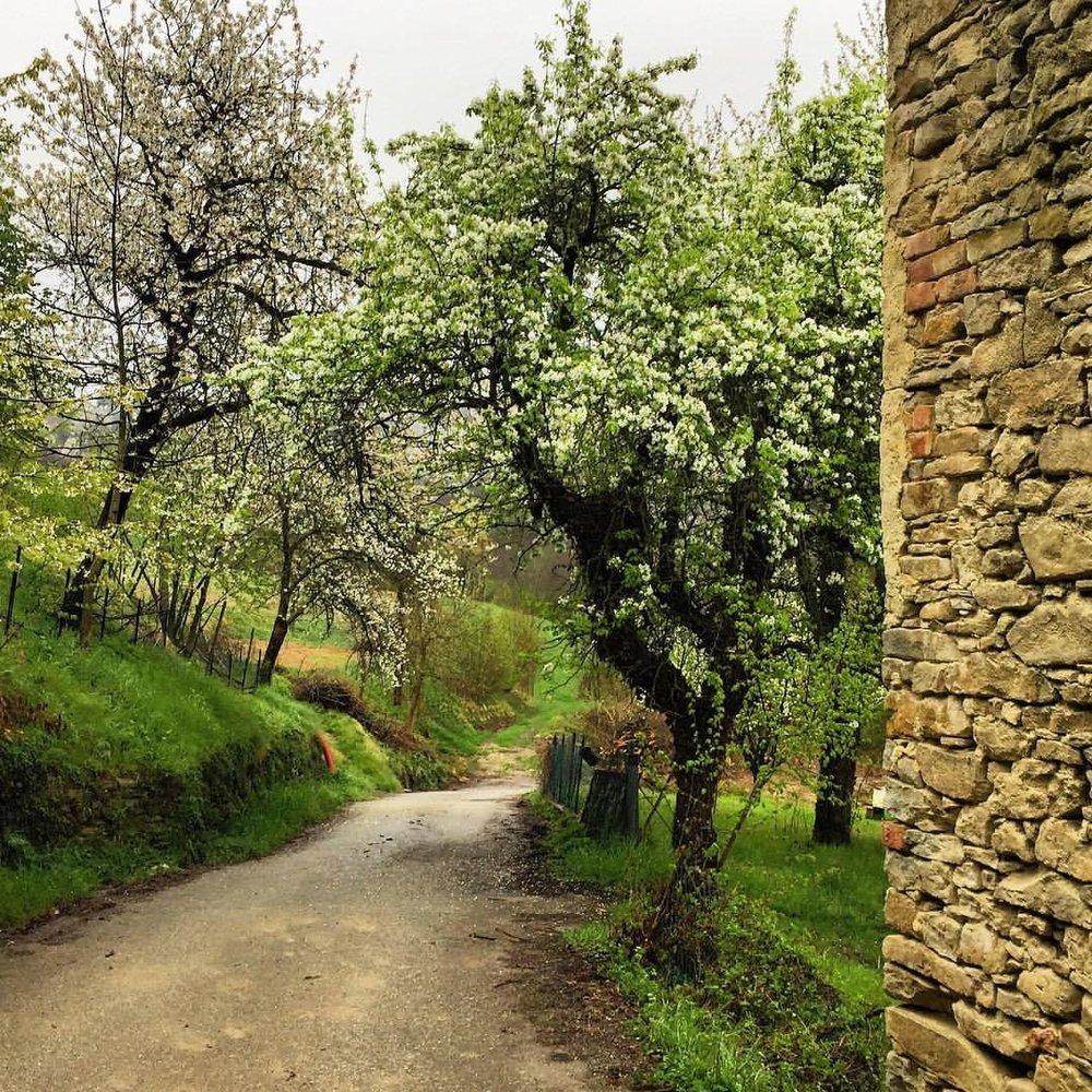 Sunday morning walk.  #italy #piedmont #appleblossom #cherryblossom  (at Strada Romantica delle Langhe e del Roero)