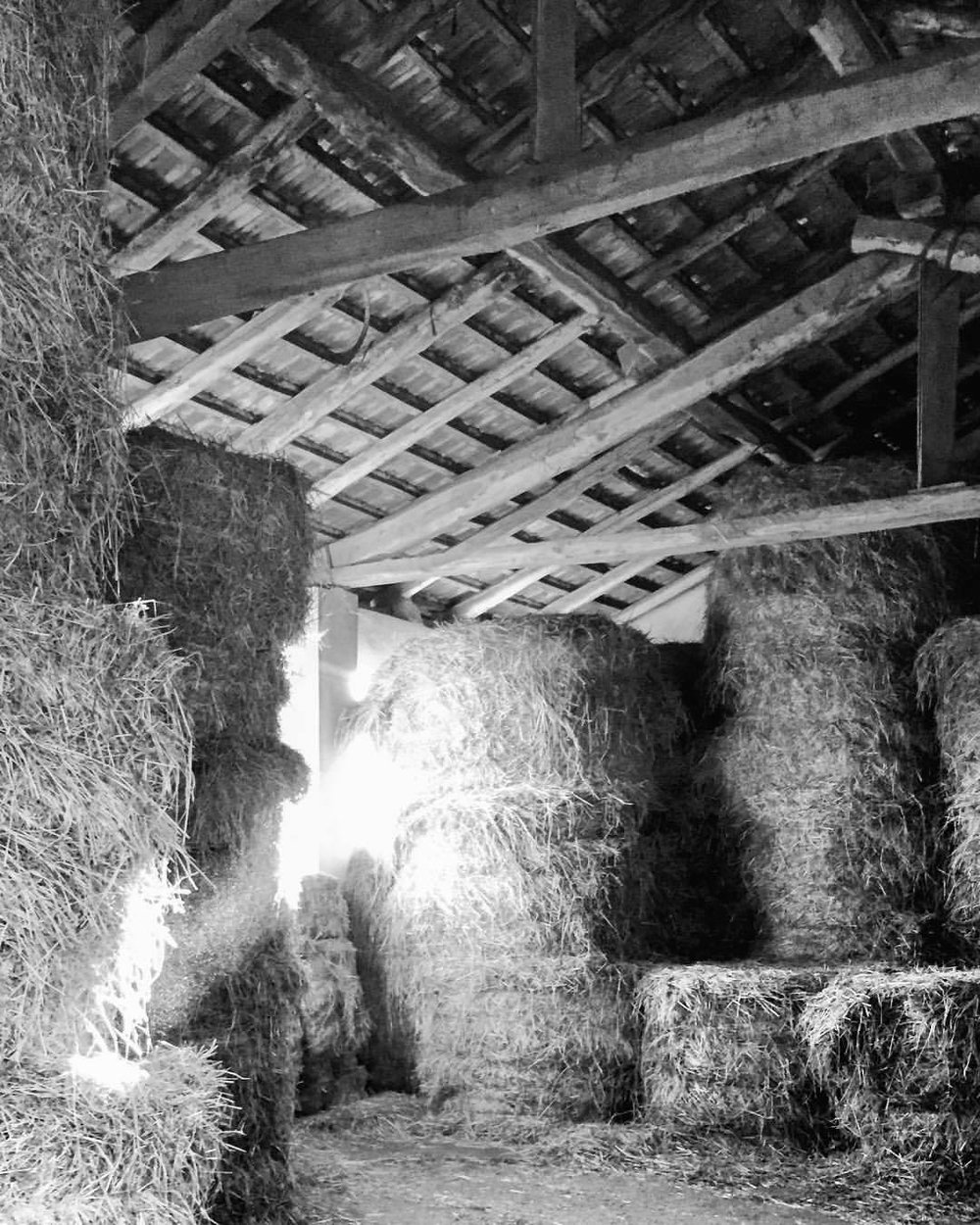 Late afternoon light streams through a hay barn,  cows wail underfoot  waiting to be fed.  A neighboring field,   stubbly from last year's corn harvest   alights with birds  and pyramids of manure,  like dark stacks   imagined by Van Gogh,  their steam rising  against the reds  of the setting sun.  #italy #piedmont #langhe #farmlife  (at Strada Romantica delle Langhe e del Roero)