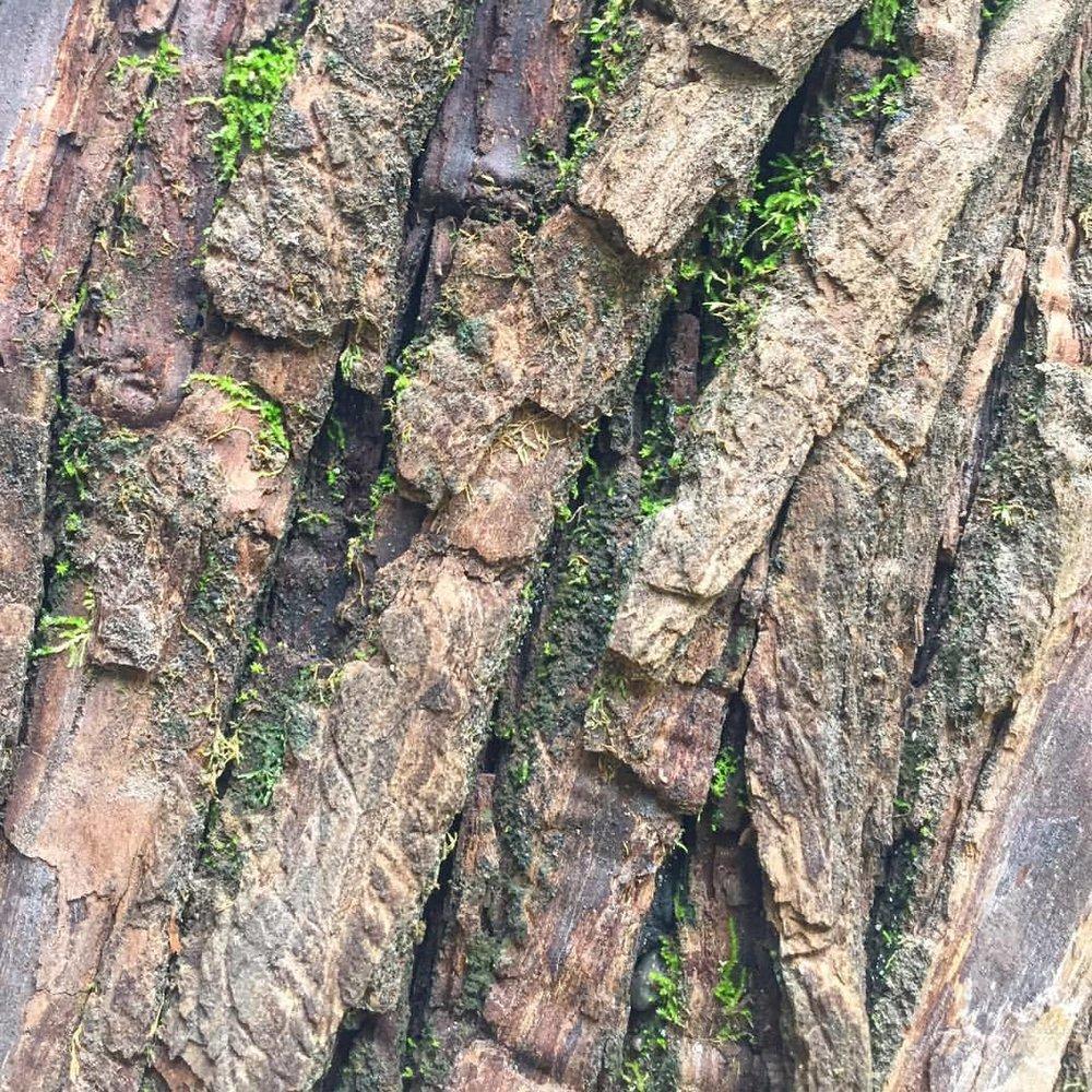 Bark.  #nature #trees🌳 #colorsofnature  (at Napa, California)