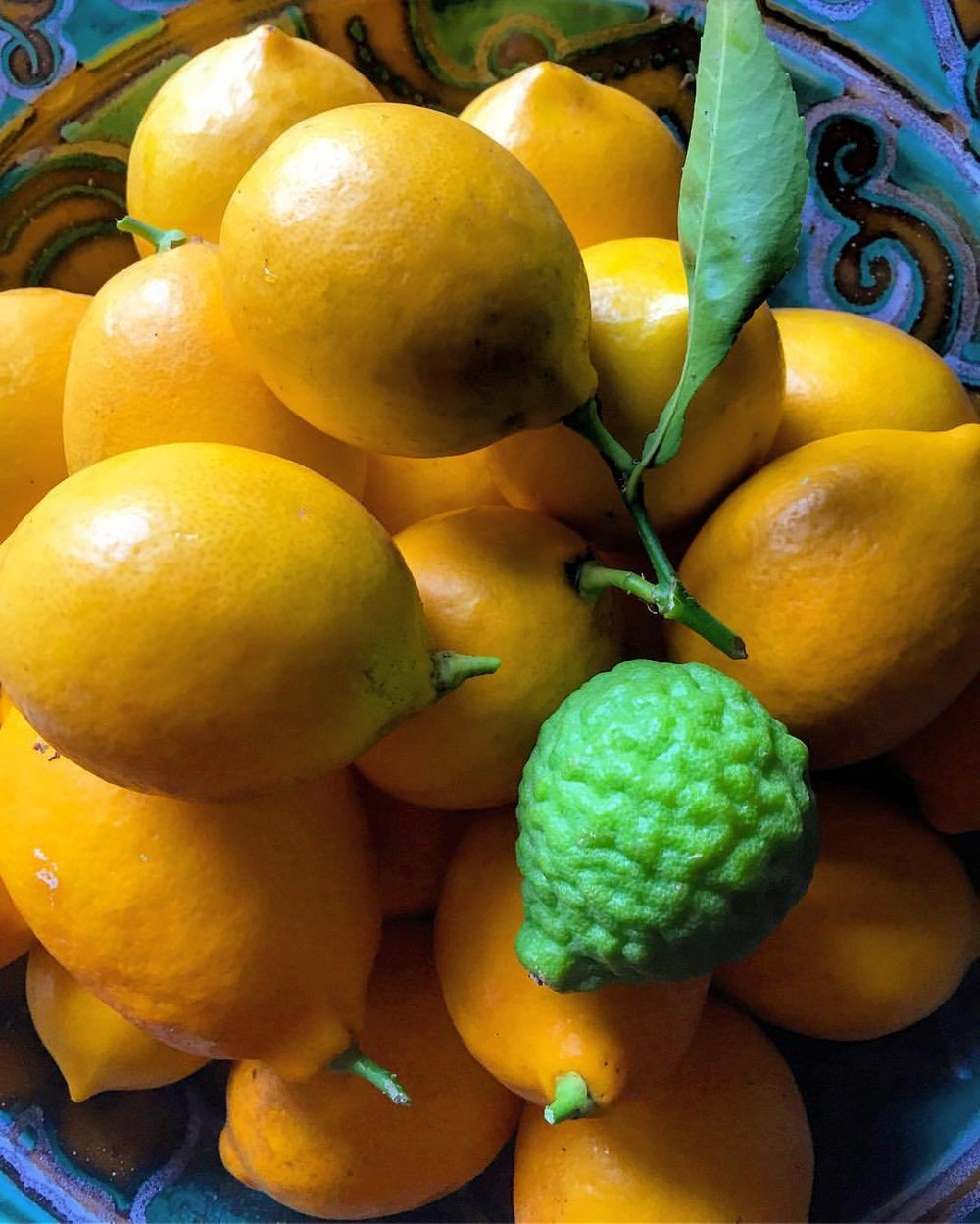 The first winter spent in California, I was completely over the moon about its citrus.  I still am.  #california #garden #citrus  (at At Home in Napa)