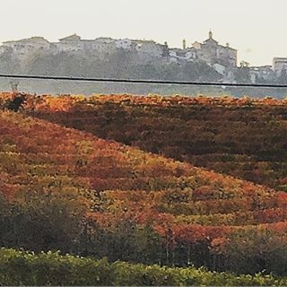 Late afternoon in Barolo.  #italy #piedmont #nebbiolo #autumn  (at Barolo Provincia di Cuneo)