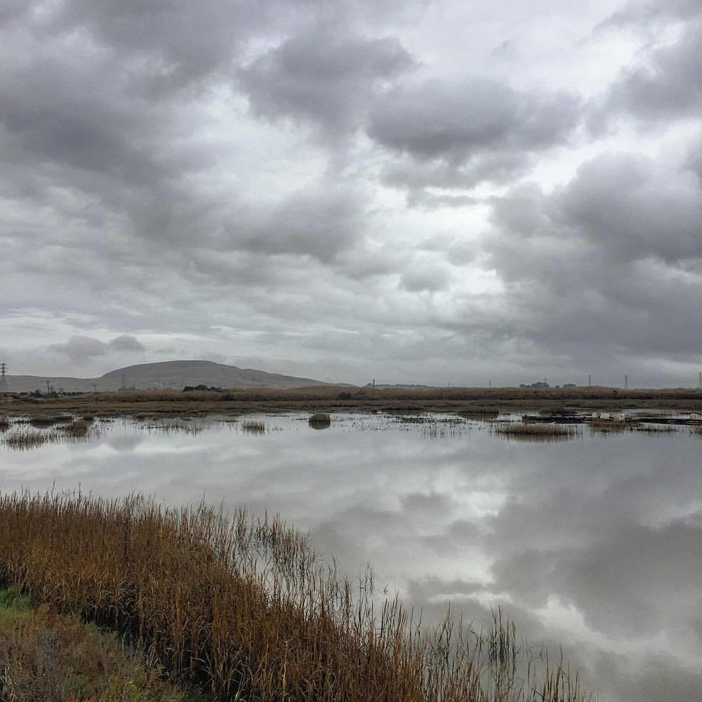 Rainy Sunday reflections on the marsh.  #california #autumn #waterfowl  (at Port Sonoma Marina)