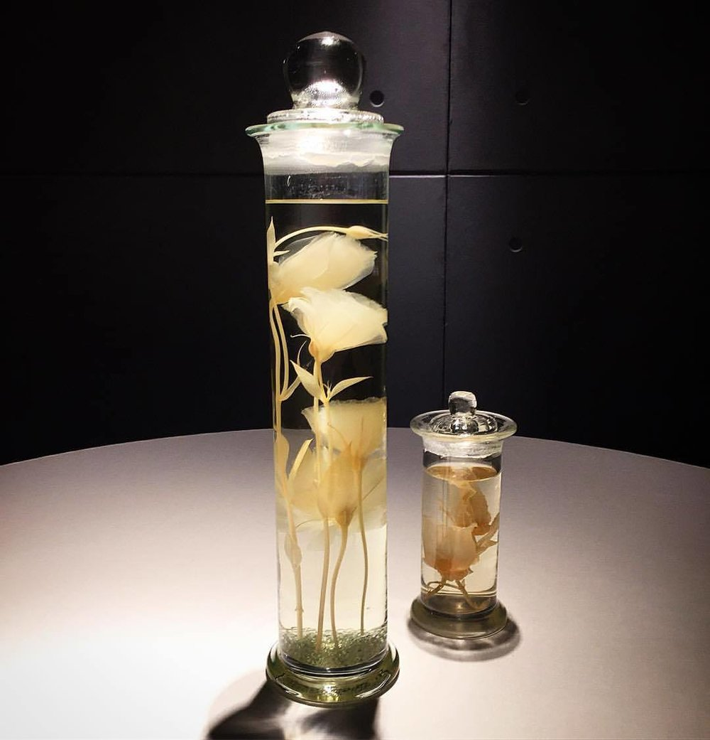 Flowers preserved in alcohol.  #spain #madrid #ristorantecibo  (at Puerta del Sol Madrid)