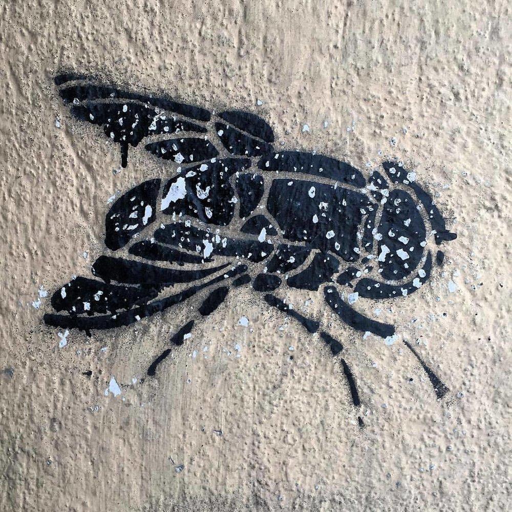 Graffiti.  #italy #graffiti #fliesarehateful (at Mondovì, Italia)