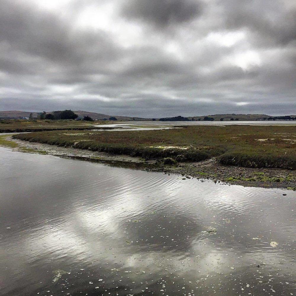 Foggy skies.  #california #bodega #wildliferefuge  (at Bodega Bay, CA)