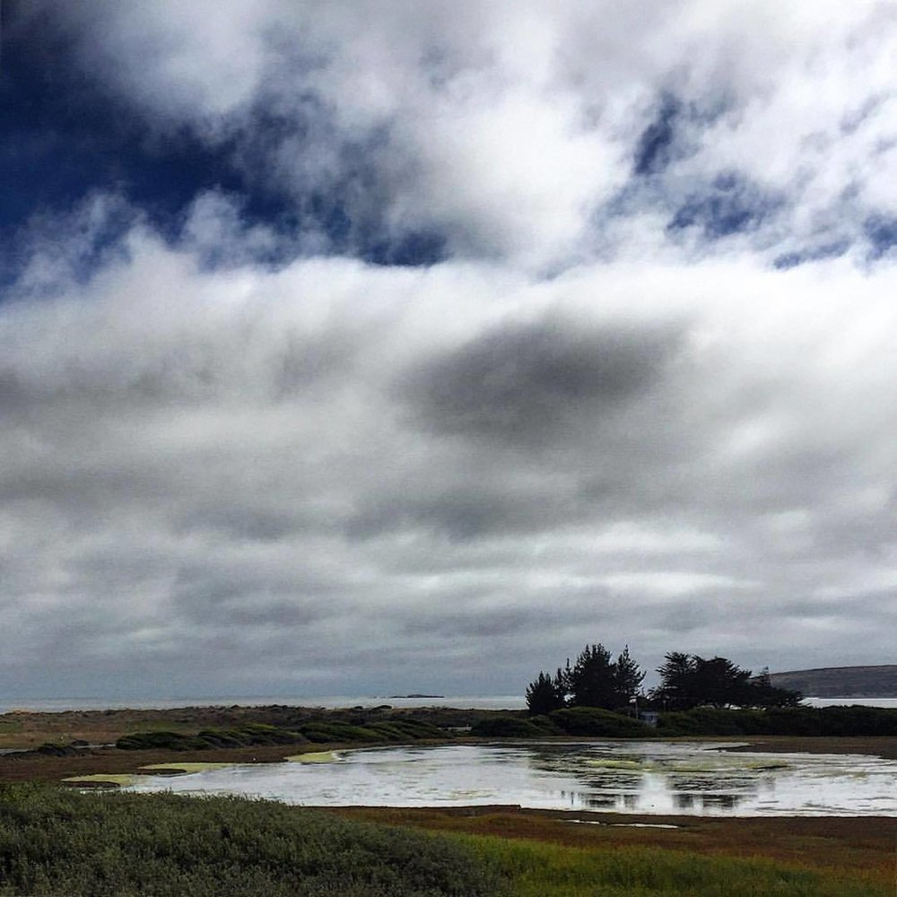 Afternoon light over Bodega Harbor.  #california #marshland #wildliferefuge  (at Bodega Bay, CA)