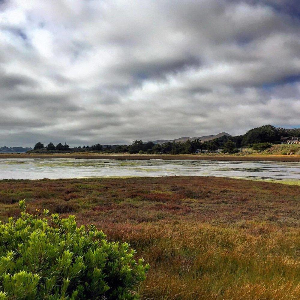 Afternoon light on the marshes.  #california #marshland #wildliferefuge  (at Bodega Bay, CA)