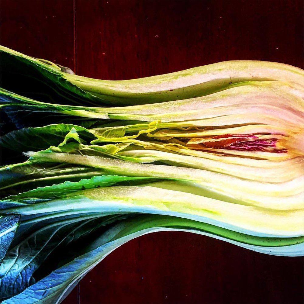 Bok choy.  #california #vegetables #nyeranchfarm  (at Westport, California)