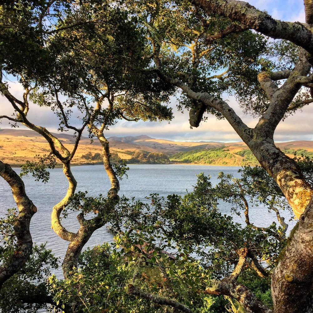 Tomales Bay.    Inverness, California.
