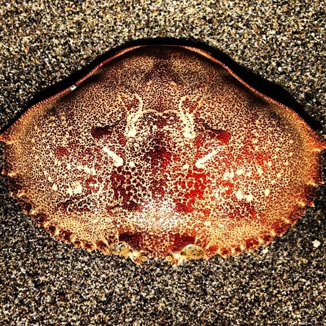 Crab.   (at Seaside, Oregon.)