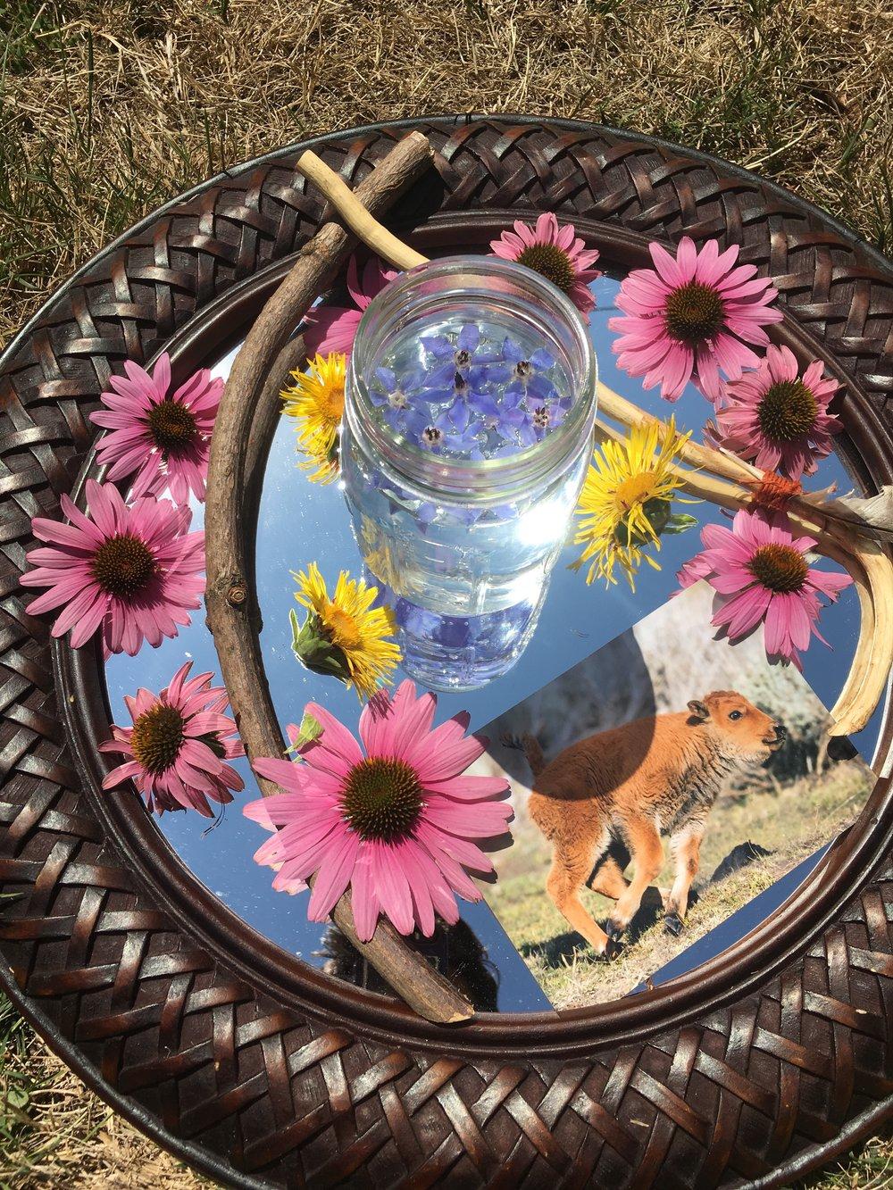herbalism oregon herbalist plant eugene