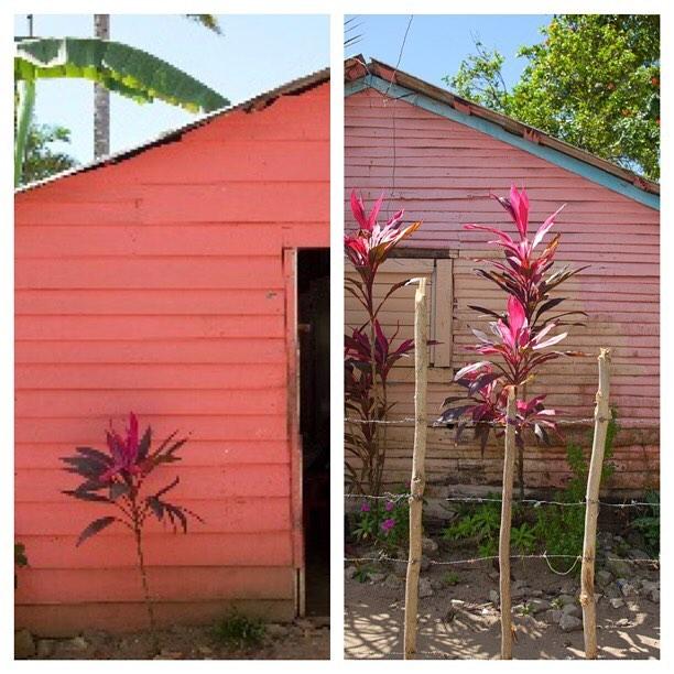 #Cabarete  #streetphotography #thattravelblog #livetravelchannel #lonely_planet #worlderlust #artofvisuals #pink