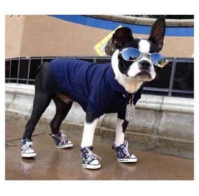 the-sitch-dog-sneakers.jpg