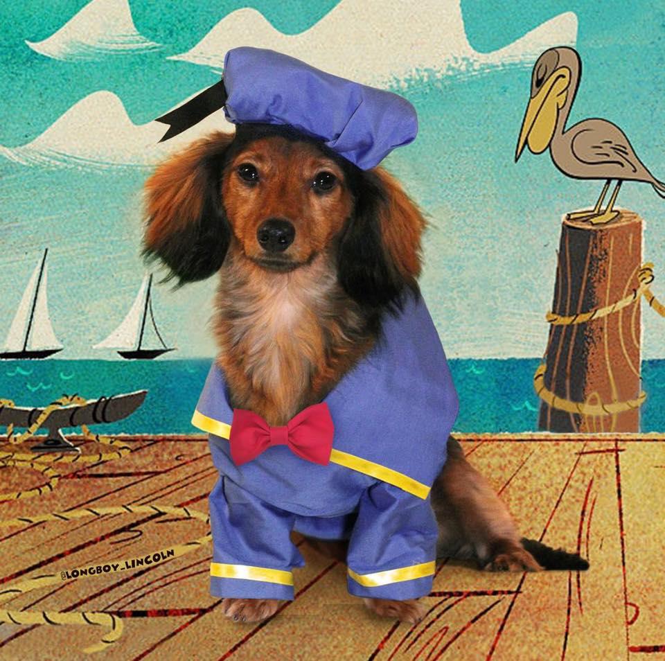 the-sitch-longboy-lincoln-dog-costume.jpg