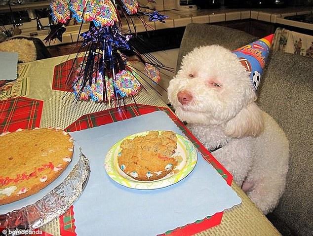 the-sitch-dog-birthday.jpg