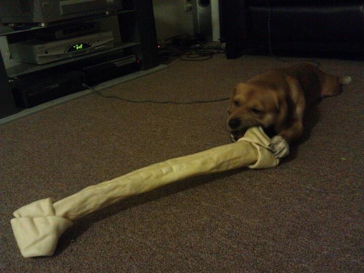 the-sitch-giant-dog-bone2.jpg