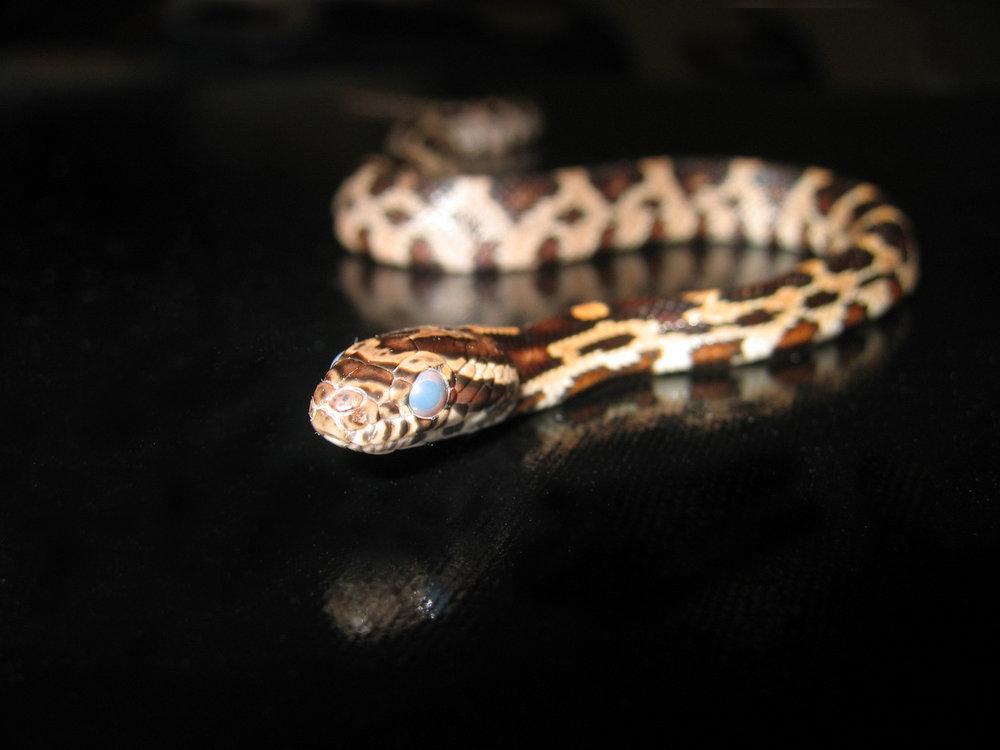 snake-1385290-1600x1200.jpg