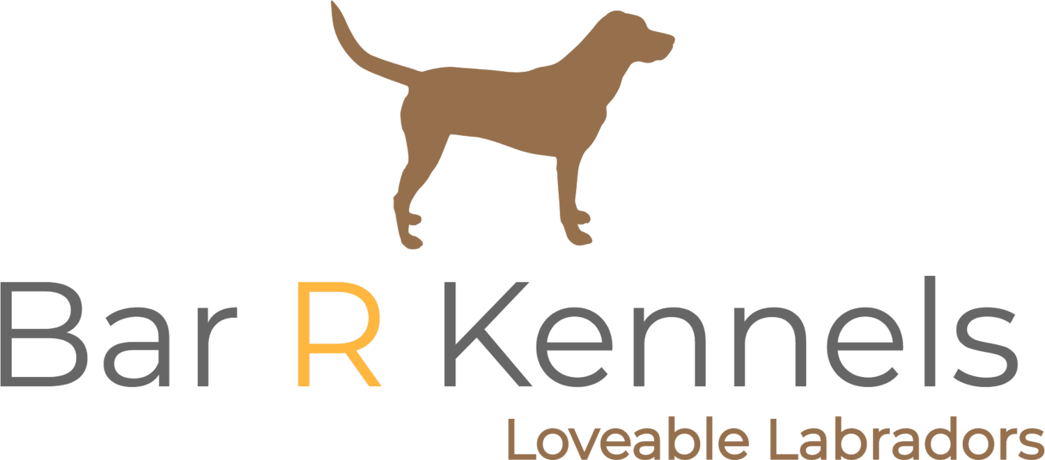 Bar R Kennels | Labrador Puppies For Sale | Houston