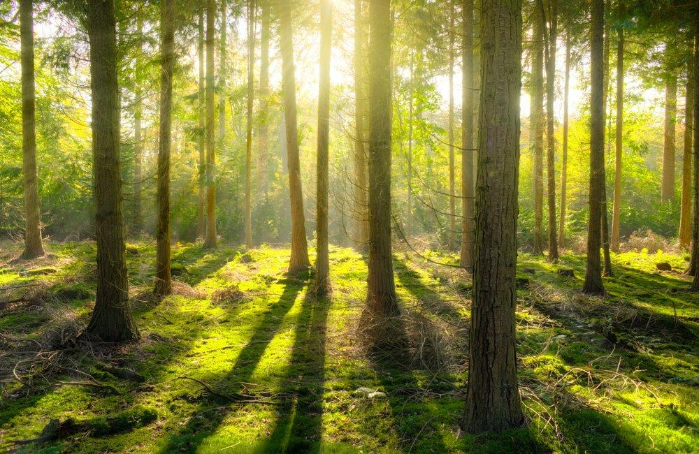 bright-daylight-environment-240040.jpg