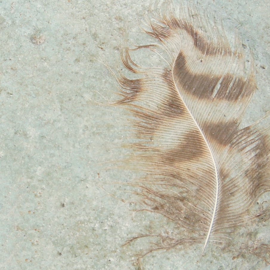 Feathers -