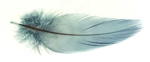 Feather horizontal lighter TRANS flipped .png