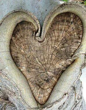 Heart bark .png