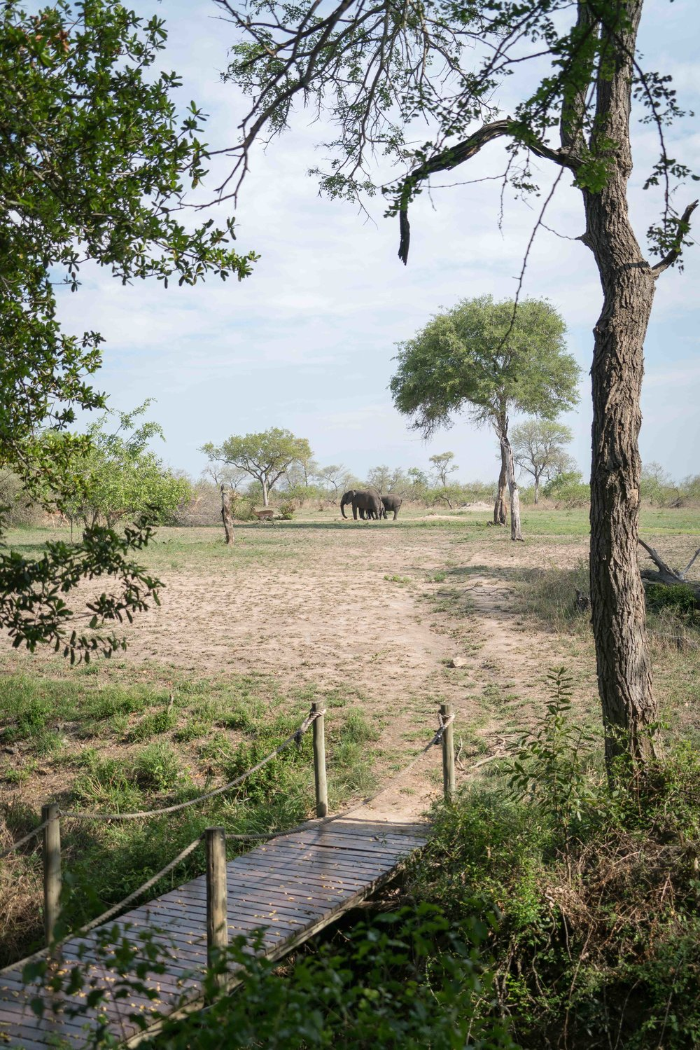View out the the back of the bar. Elephants today, lions tomorrow. There is an electric fence across the bridge which is not visible.