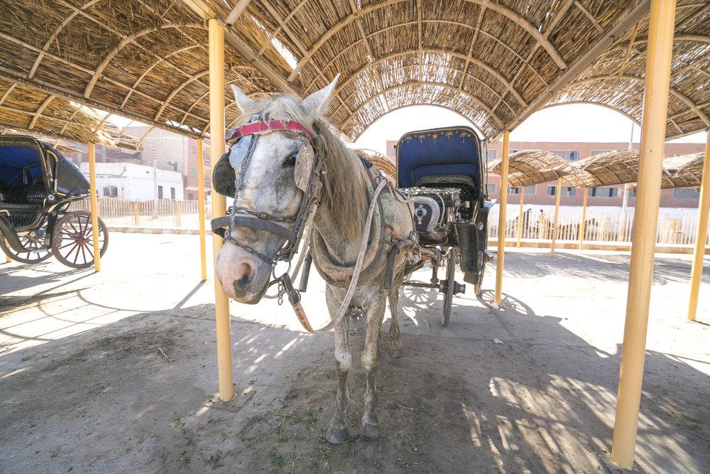 Our Horse Cart in Edfu