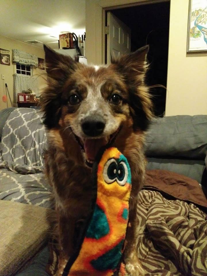 Kush's Dog Abby