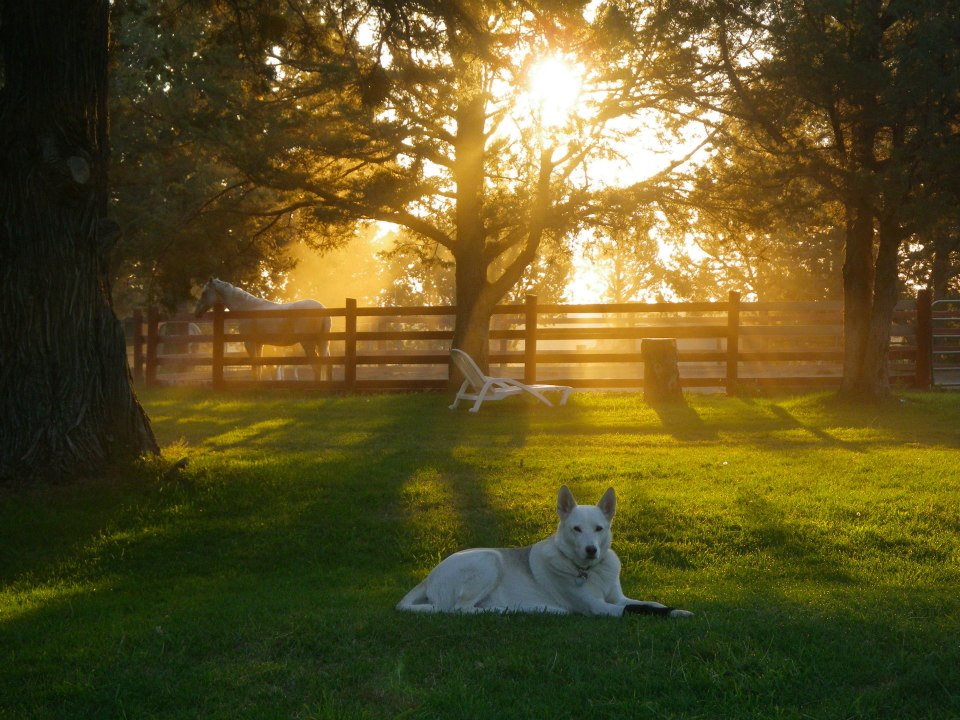 sunset-with-dog-and-horse.jpg