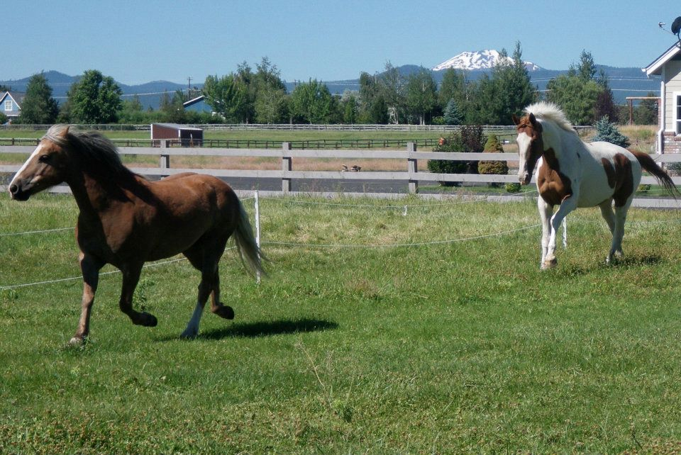 horses-chasing-each-other.jpg