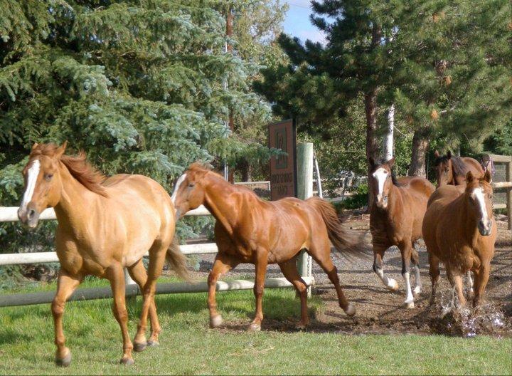 horses-running-3.jpg