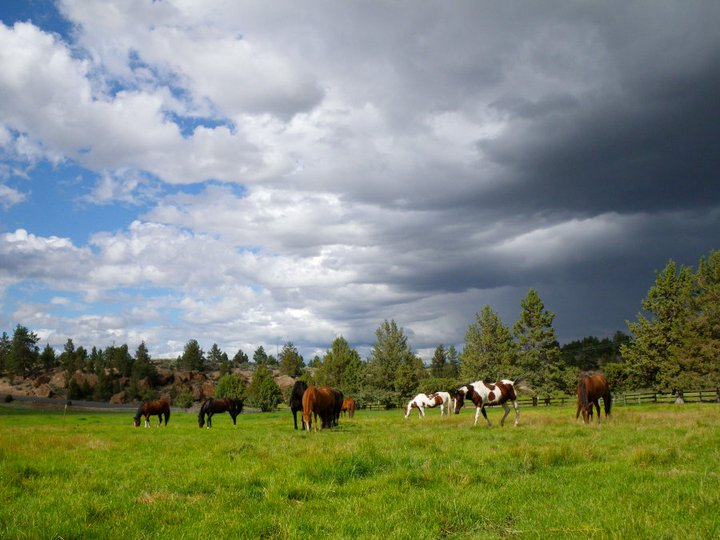 horses-in-field-with-dark-cloud.jpg