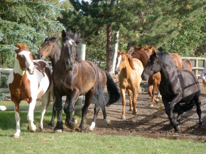 horses-running-2.jpg