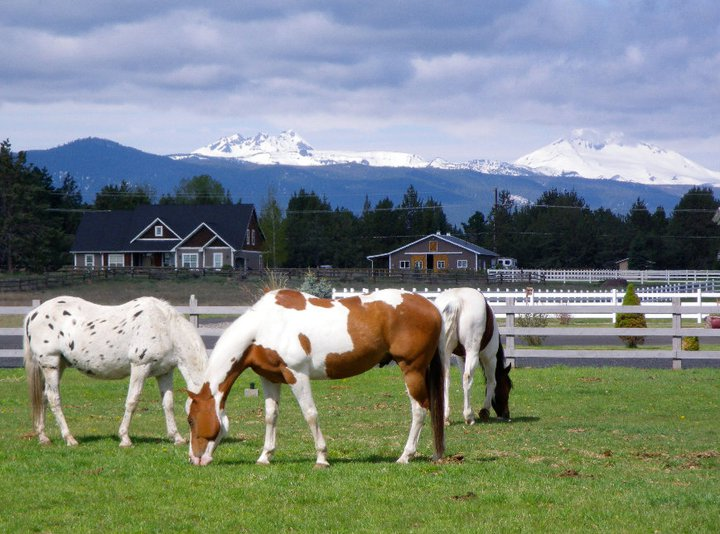 horses-in-beautiful-scenery.jpg