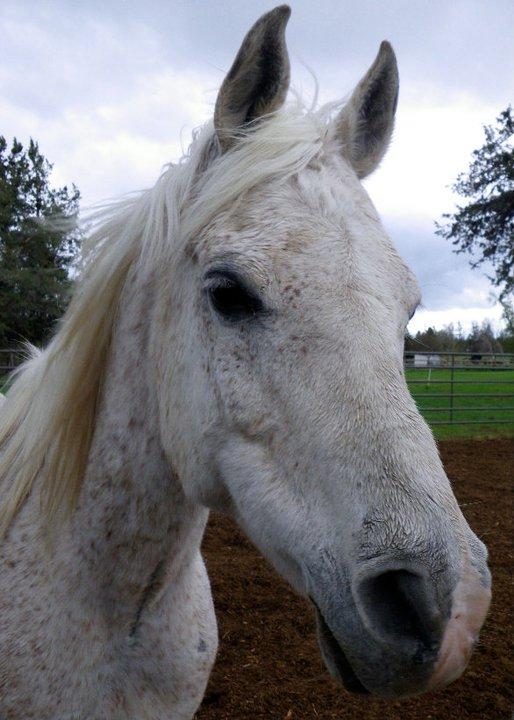horse-11.jpg