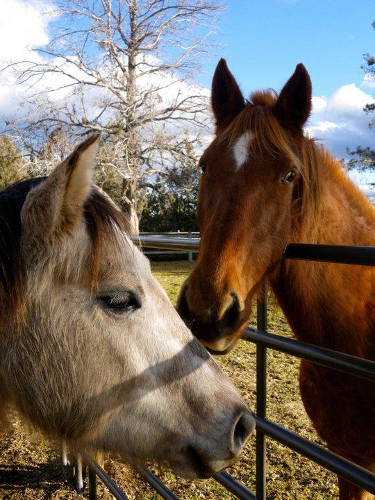 horses-10.jpg