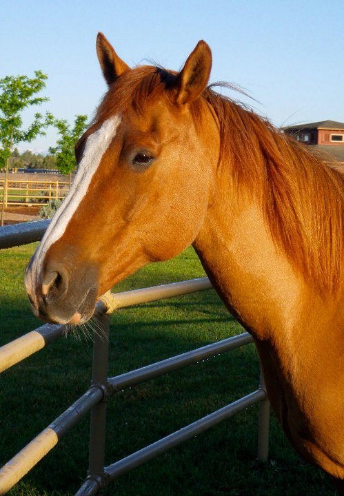 horse-8.jpg