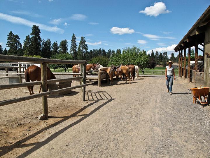 horses-outside.jpg