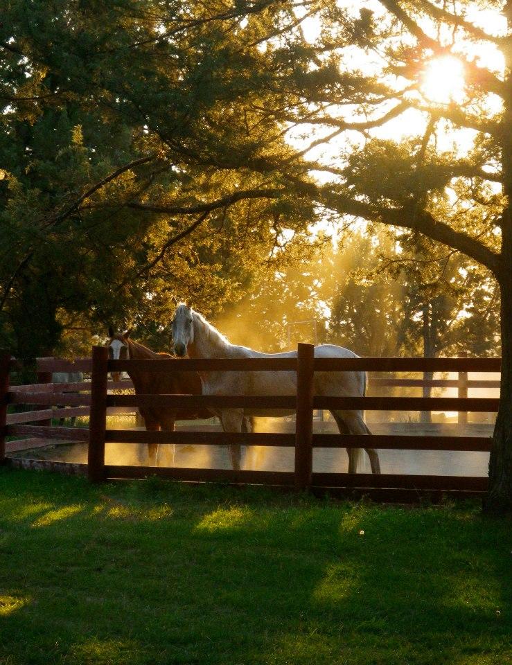 sunset-horses.jpg
