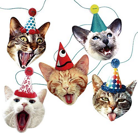 funny cat party banner.png