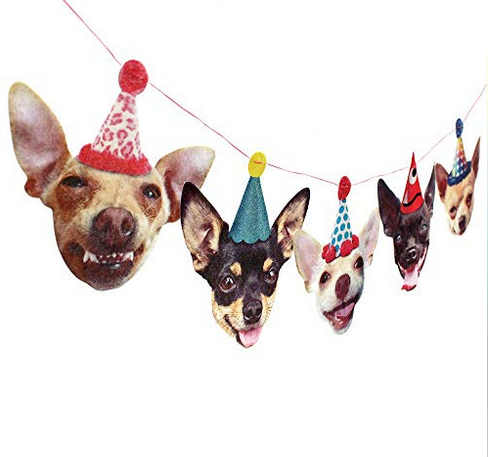 funny chihuahua party banner.png