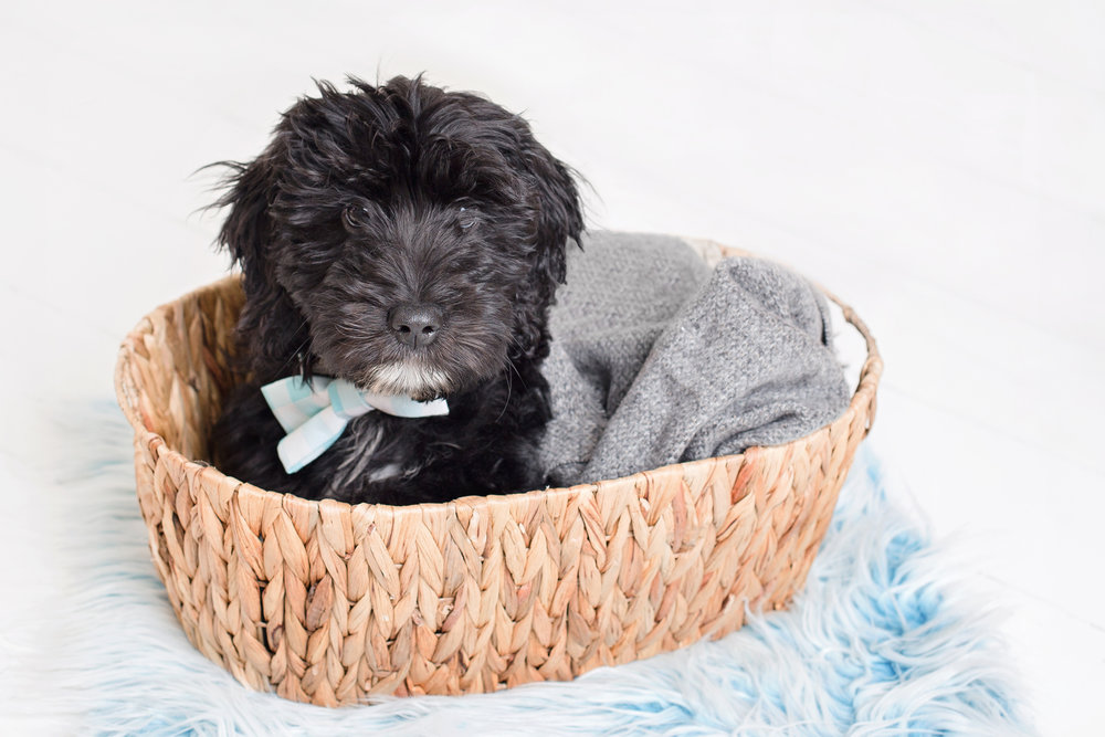 puppy in basket.jpg