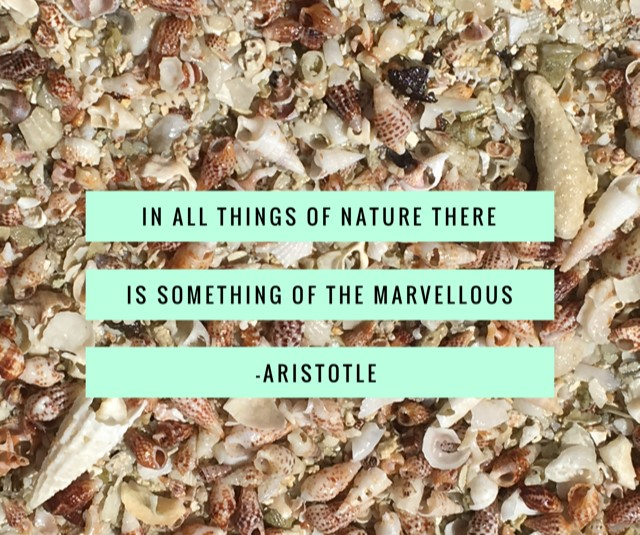 Nature Quote Aristotle