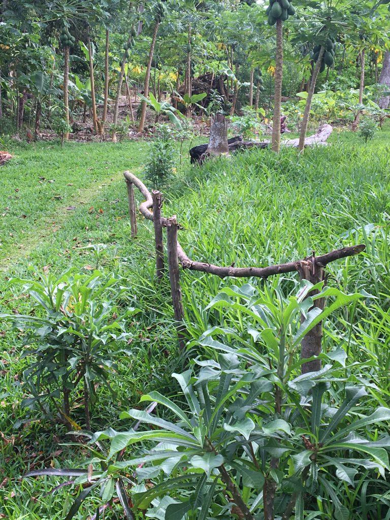 village-path-e1519113994248-768x1024.jpg