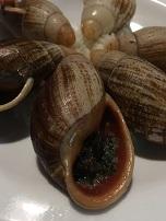 Isle-of-Pines-Snails.jpg