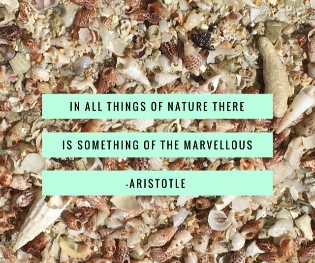 Nature Quote Aristotle