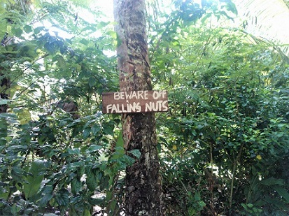 falling coconut sign